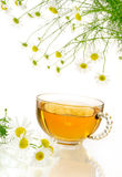 Cup of chamomile tea with fresh chamomilla flowers. Over white background royalty free stock images