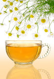Cup of chamomile tea with fresh chamomilla flowers. Over colored background stock image