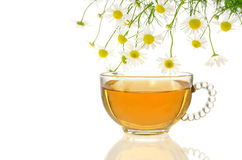 Cup of chamomile tea with fresh chamomilla flowers. Over white background stock image