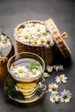 Cup of chamomile tea. Chamomile tea in a glass cup Royalty Free Stock Photos