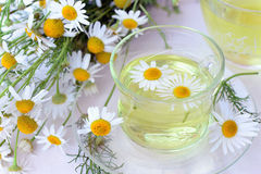 Cup of chamomile tea. Chamomile tea in glass cup and fresh chamomile flowers Stock Photography