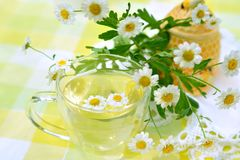 Cup of chamomile tea. A cup of herbal tea and  flowers in the outdoors stock photos