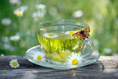 Cup of chamomile tea on a wooden table. butterfly sitting on a cup of herbal tea. cold and flu remedy. Cup of chamomile tea on a wooden table. butterfly sitting stock images