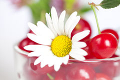 Cup with cherries and chamomile Stock Photos