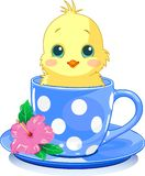 Cup chick. Cute chicken in tea cup. Vector illustration Royalty Free Stock Photo