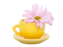 Cup and chrysanthemum flower Royalty Free Stock Images