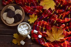 Cup of cocoa with marshmallow, chocolate cookie and peanut biscuit, book, blanket. Autumn relaxation, country lifestyle, seasonal Royalty Free Stock Photography