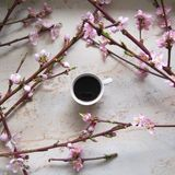 A cup of coffe with cherry blossom. A cup of coffee with cherry blossom on marble table royalty free stock photo