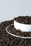 A cup of coffe on coffe beans Royalty Free Stock Photography