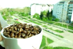 Cup of coffe full with beans. Cup of coffe full with coffe beans stock photo