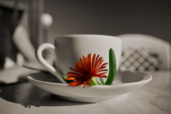 Cup of coffee. In B&W and coloured flower Royalty Free Stock Photos