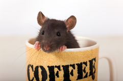 A cup of coffee? Stock Photo