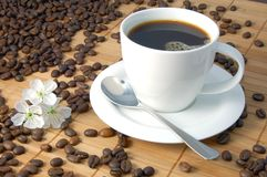 Cup of coffee. A white cup between brown coffee beans Stock Images
