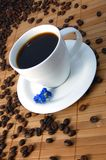 Cup of coffee. A white cup between brown coffee beans Stock Photos