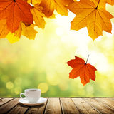 Cup coffee and autumn Royalty Free Stock Image