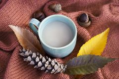 Cup of coffee with an autumn leaf and cones on a knitted sweater close-up, top view, copy space stock images