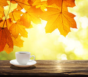 Cup of coffee and autumn Stock Photos