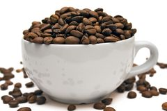 Cup of Coffee Beans. White cup of brown coffee beans Stock Images