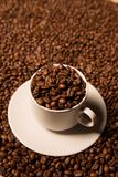 Cup with coffee beans on a dark background Royalty Free Stock Image