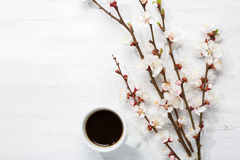 Cup of coffee and branches of blossoming apricot. Royalty Free Stock Image