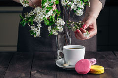 Cup of coffee and cherry blossom branch on a dark background Stock Images