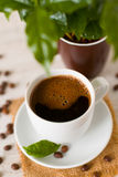 A cup of coffee  and coffee tree,close up Stock Photos