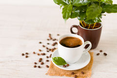 A cup of coffee  and coffee tree Royalty Free Stock Photos