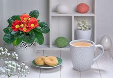 Cup of coffee and cookies on white wooden table with red primros Stock Photos