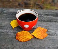 Cup of coffee in the fall Royalty Free Stock Image
