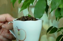 Cup of coffee full with beans. Cup of coffee full with coffe beans stock photo