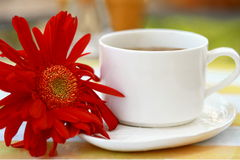 Cup of coffee with gerbera Stock Photo