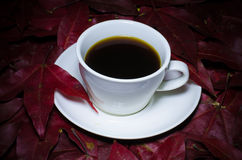 A cup of coffee on maple leafs Stock Image