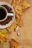 The cup of coffee with maple leaves and everlasting flowers Stock Image