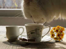 Cup of coffee, milk and cat. Yellow flowers on a table Royalty Free Stock Photos