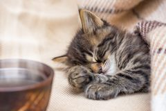 A cup of coffee near a little striped cat that sleeps under a wa royalty free stock image