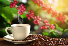 Cup of coffee with smoke and coffee beans on coffee tree Stock Photo