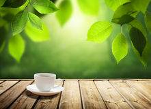 Cup coffee and sunny trees Royalty Free Stock Photography