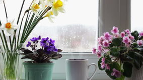 Cup of coffee tea hot drink on window sill next to a beautiful home flower in a pot stock footage