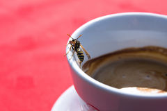 Cup of coffee and wasp Royalty Free Stock Photo