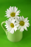 Cup of Daises Royalty Free Stock Photos
