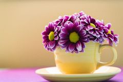 Cup-of-Daisys Royalty Free Stock Images