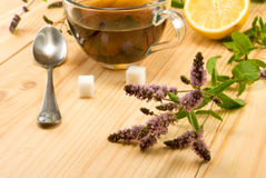 Cup with a delicious mint tea and twigs on the table. Closeup royalty free stock photos