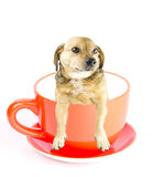 Cup dog Stock Images