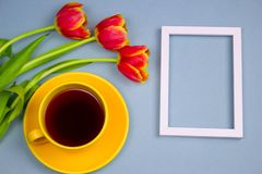 Cup of drink ,empty white mock up frame and tulips on blue table, top view. Empty copy space royalty free stock image