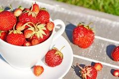 Cup Erdbeeren Lizenzfreies Stockbild