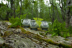 Cup with fern in forest Royalty Free Stock Image