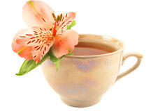Cup of flavor tea. With a flower isolated on white background Royalty Free Stock Photo