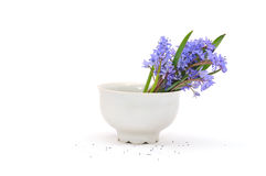 Cup of flowers Stock Photography