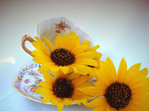 Cup of flowers. A tea cup filled with freshly cut sunflowers Royalty Free Stock Image