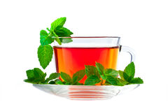 Cup of fragrant tea with fresh leaves of green tea Stock Photos
